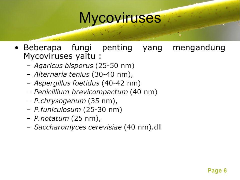Mycoviruses Beberapa fungi penting yang mengandung Mycoviruses yaitu :