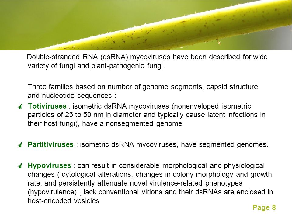 Double-stranded RNA (dsRNA) mycoviruses have been described for wide variety of fungi and plant-pathogenic fungi.