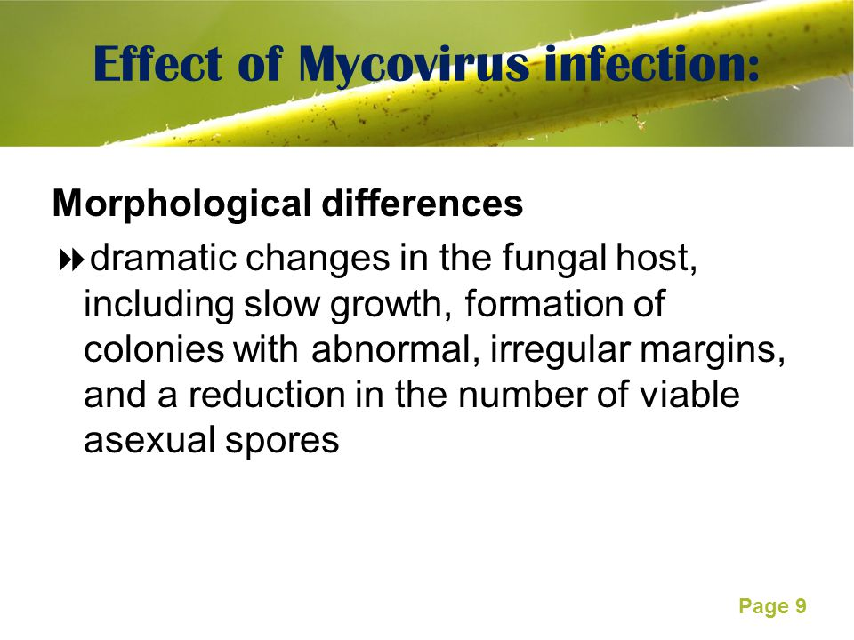 Effect of Mycovirus infection: