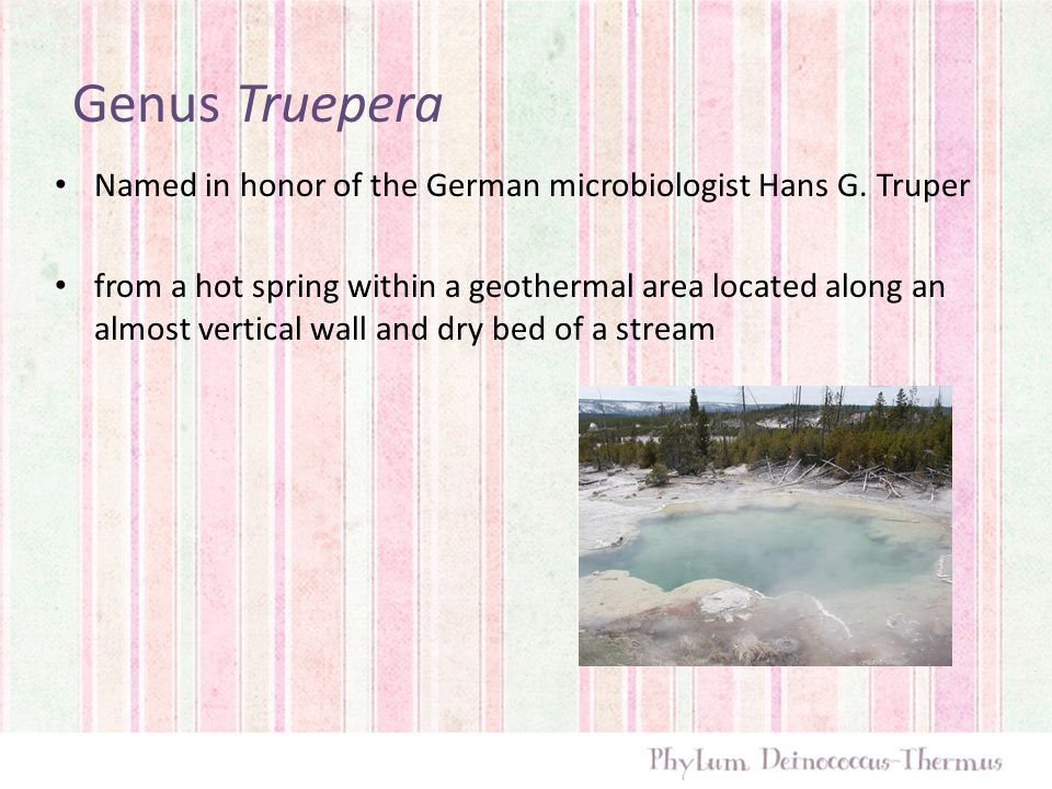 Genus Truepera Named in honor of the German microbiologist Hans G. Truper.