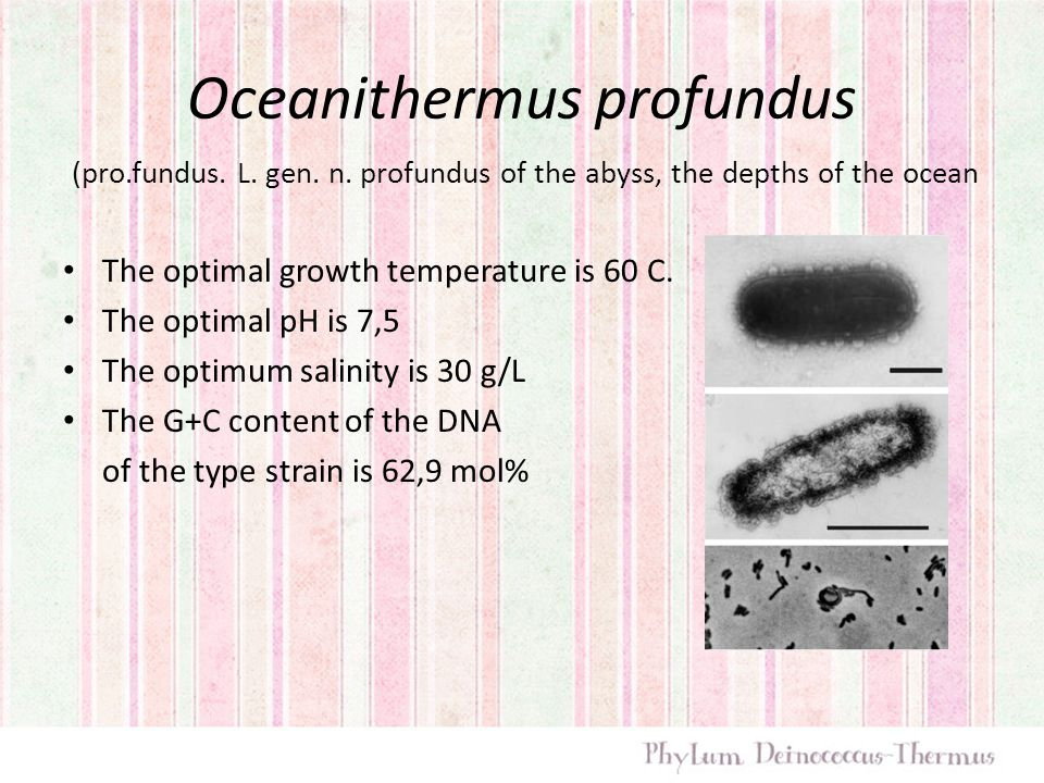 Oceanithermus profundus