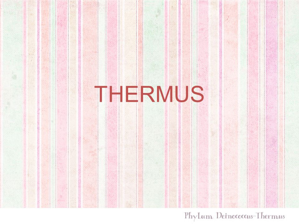 THERMUS