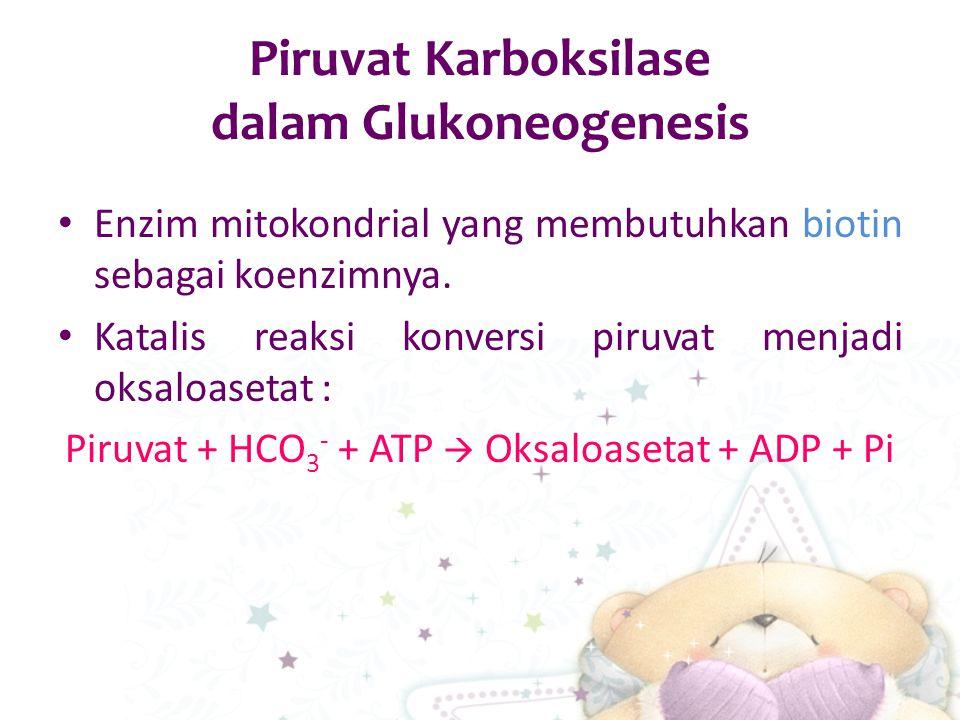 Piruvat Karboksilase dalam Glukoneogenesis