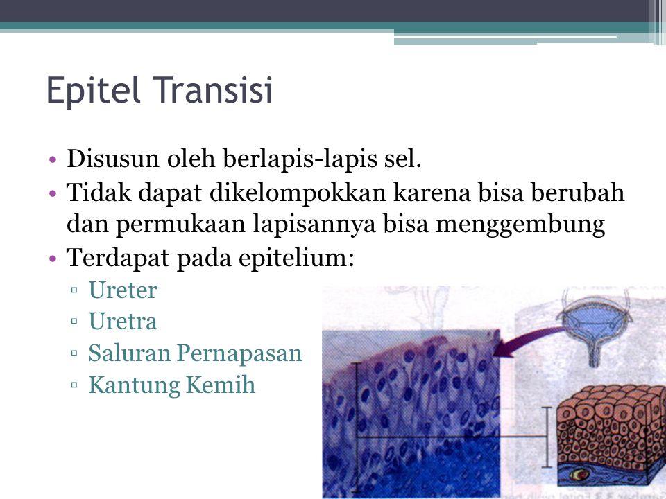 Epitel Transisi Disusun oleh berlapis-lapis sel.