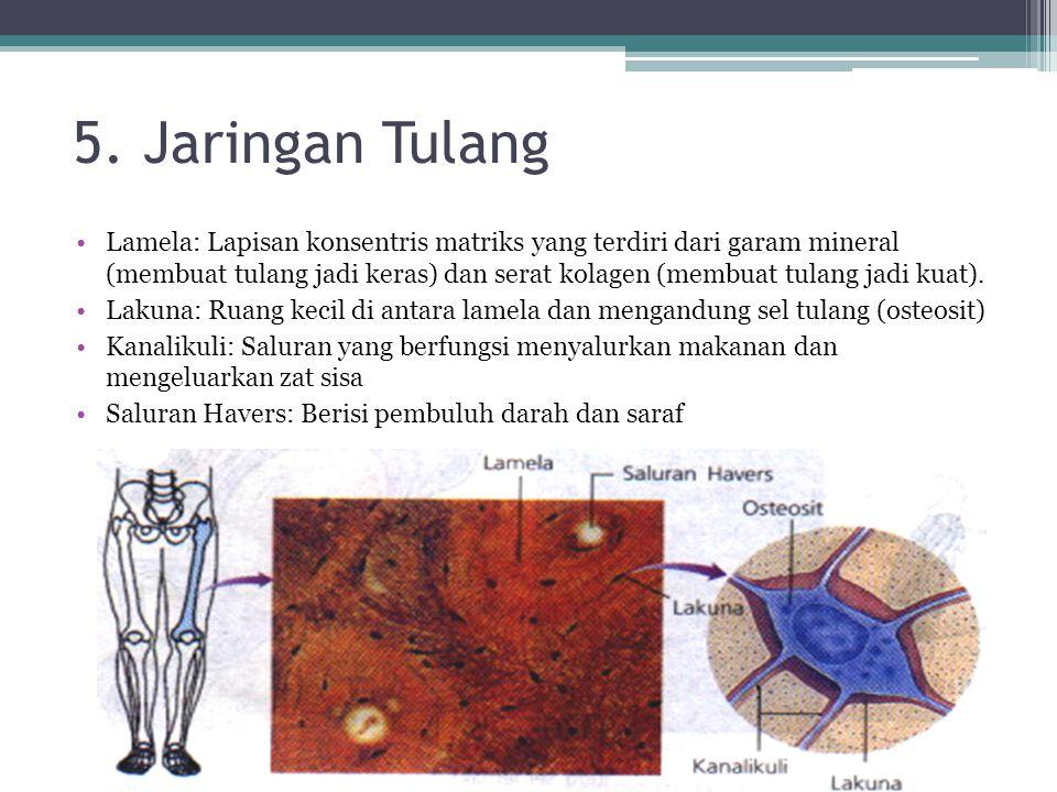 5. Jaringan Tulang