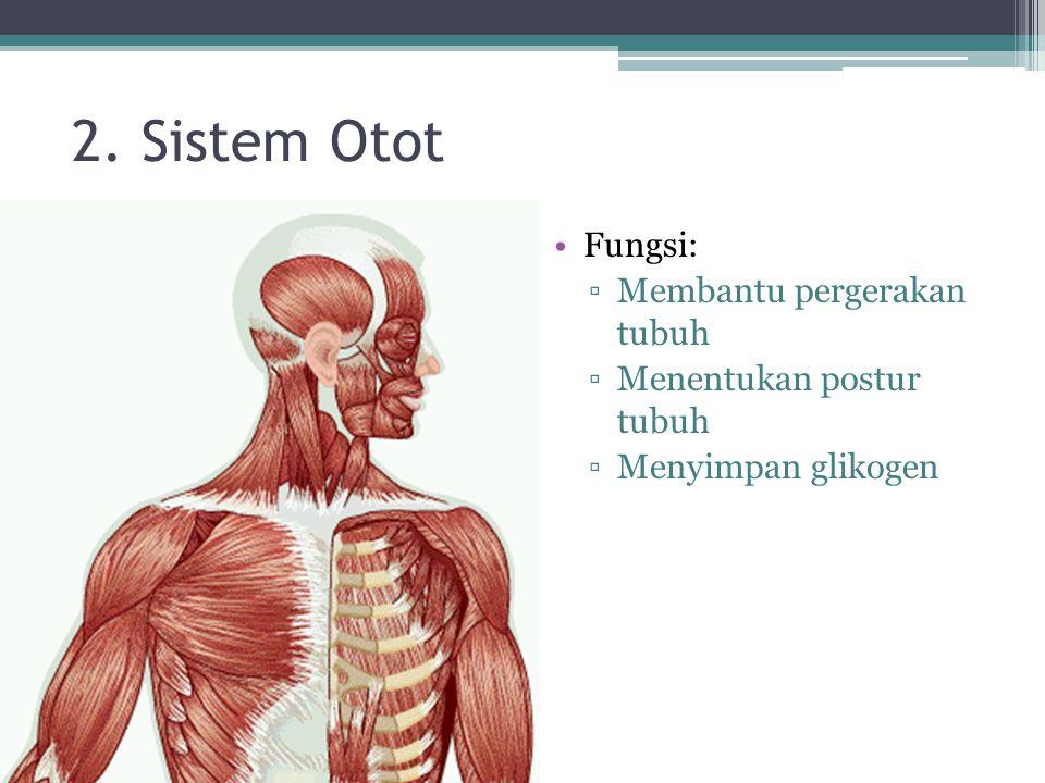 2. Sistem Otot Fungsi: Membantu pergerakan tubuh