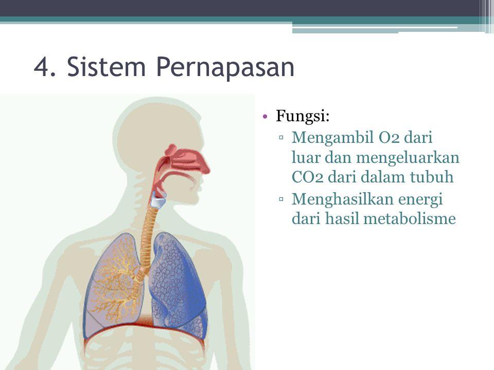4. Sistem Pernapasan Fungsi: