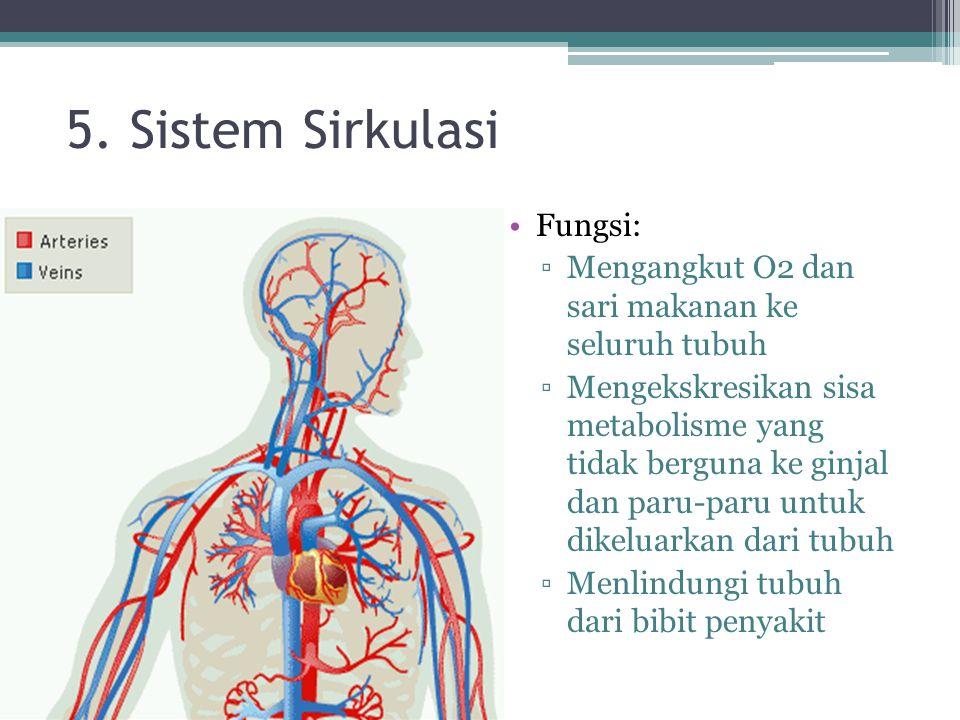 5. Sistem Sirkulasi Fungsi: