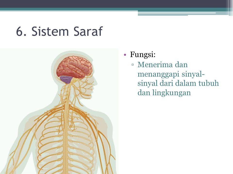 6. Sistem Saraf Fungsi: Menerima dan menanggapi sinyal- sinyal dari dalam tubuh dan lingkungan