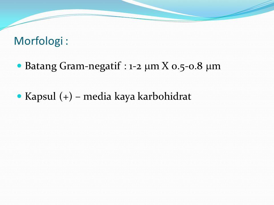 Morfologi : Batang Gram-negatif : 1-2 m X 0.5-0.8 m