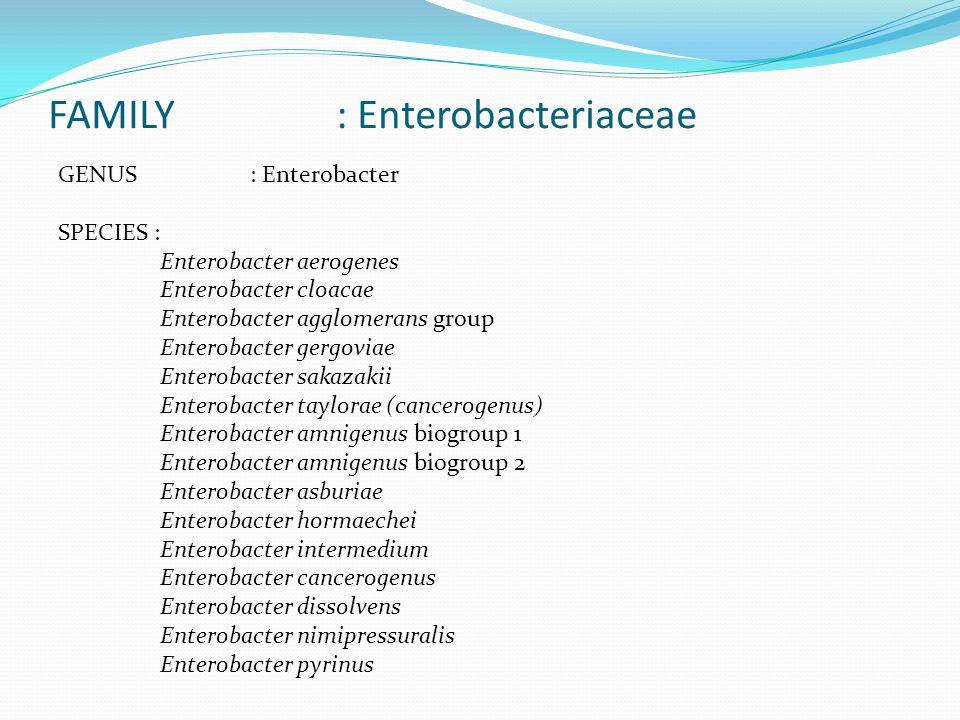 FAMILY : Enterobacteriaceae
