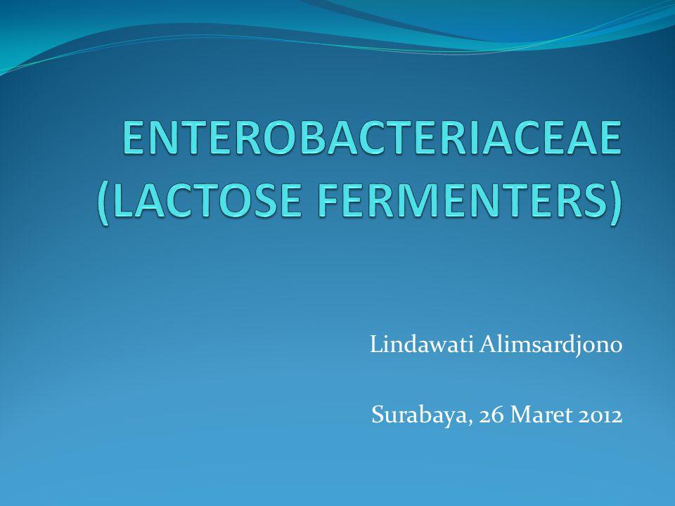 ENTEROBACTERIACEAE (LACTOSE FERMENTERS)
