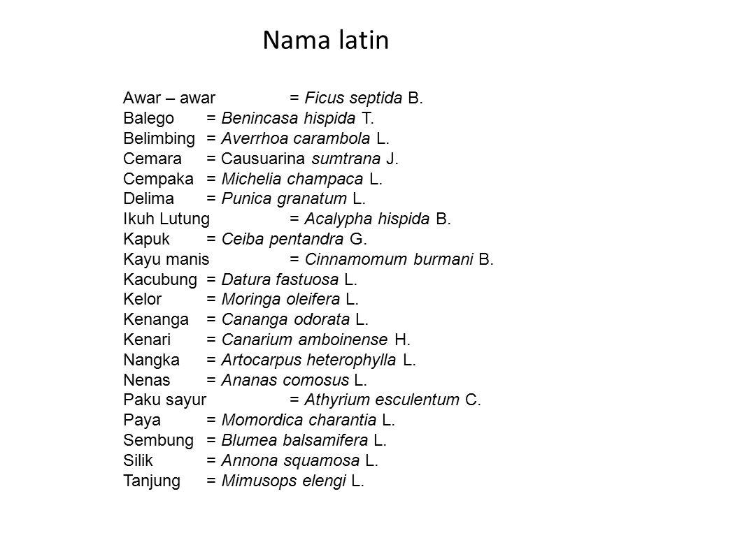 Nama latin Awar – awar = Ficus septida B.