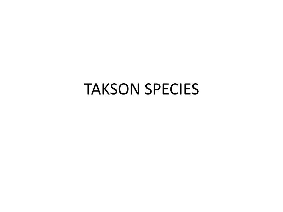 TAKSON SPECIES