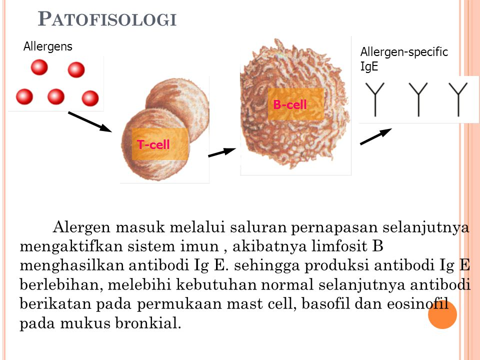 Patofisologi Allergens. Allergen-specific. IgE. B-cell. T-cell.