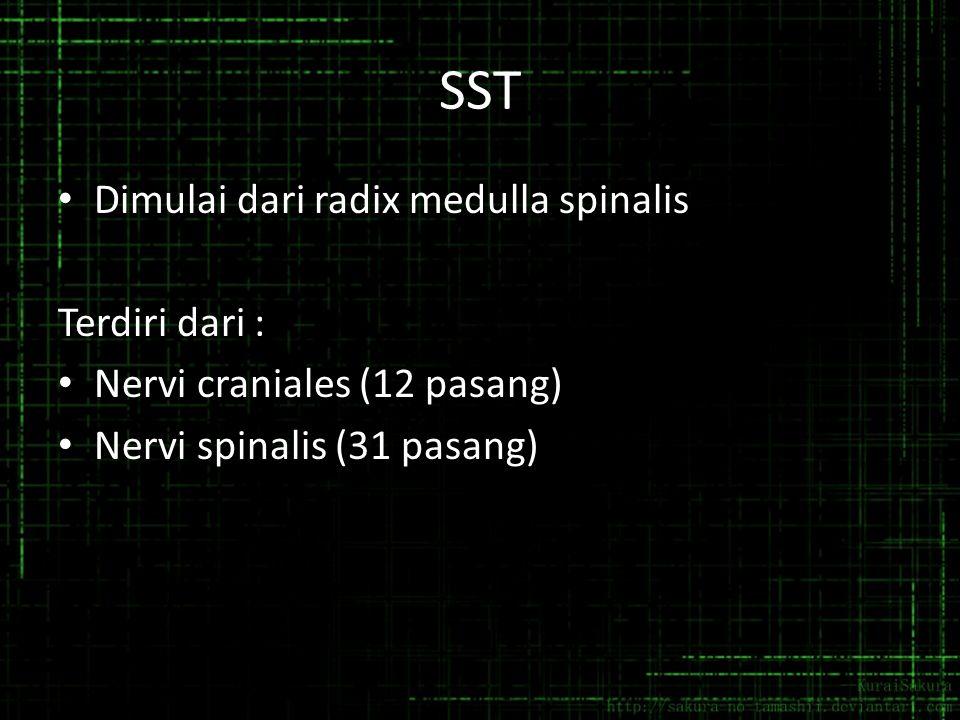 SST Dimulai dari radix medulla spinalis Terdiri dari :