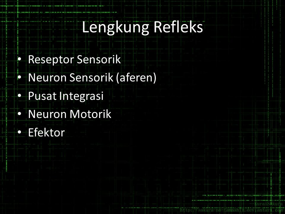 Lengkung Refleks Reseptor Sensorik Neuron Sensorik (aferen)