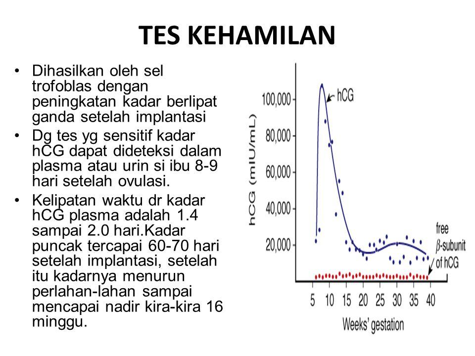 TES KEHAMILAN Dihasilkan oleh sel trofoblas dengan peningkatan kadar berlipat ganda setelah implantasi.