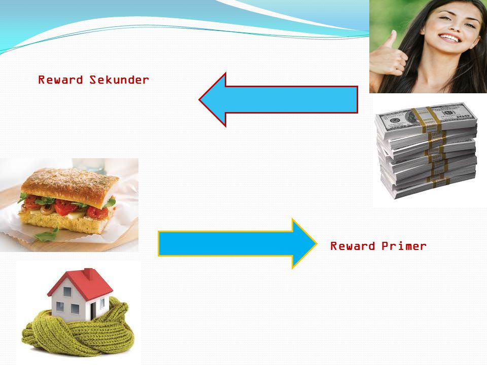 Reward Sekunder Reward Primer