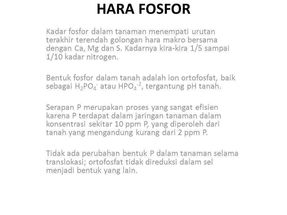 HARA FOSFOR