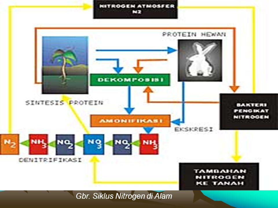 Gbr. Siklus Nitrogen di Alam