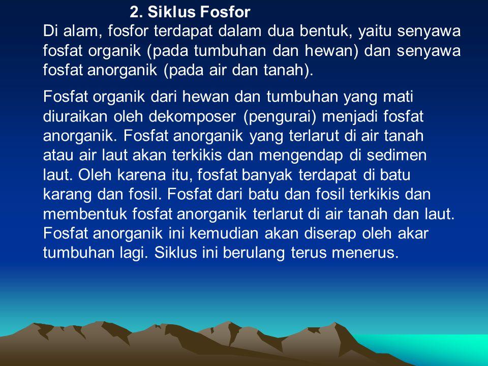 2. Siklus Fosfor
