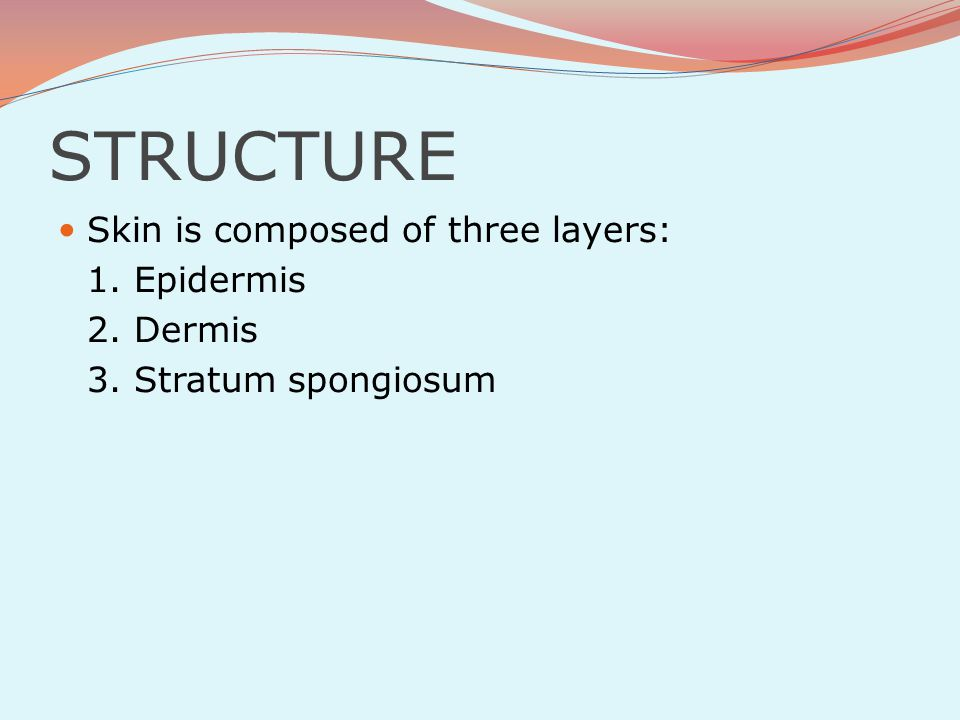 STRUCTURE Skin is composed of three layers: 1. Epidermis 2. Dermis