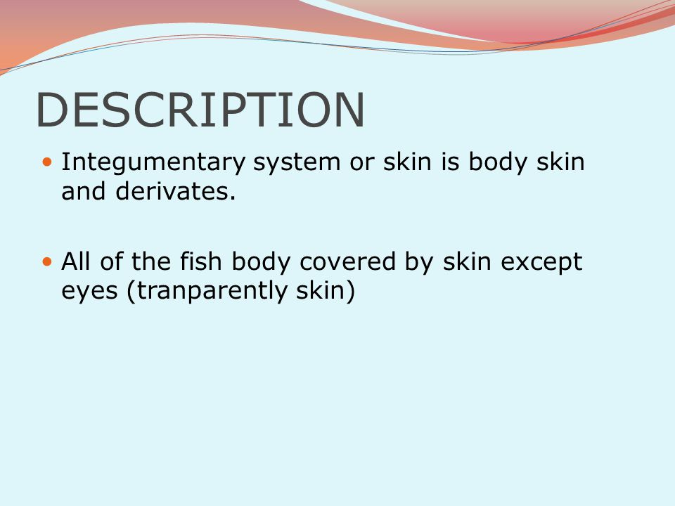 DESCRIPTION Integumentary system or skin is body skin and derivates.