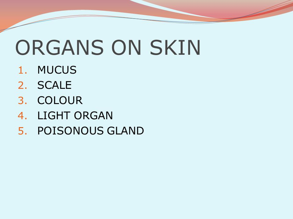 ORGANS ON SKIN MUCUS SCALE COLOUR LIGHT ORGAN POISONOUS GLAND