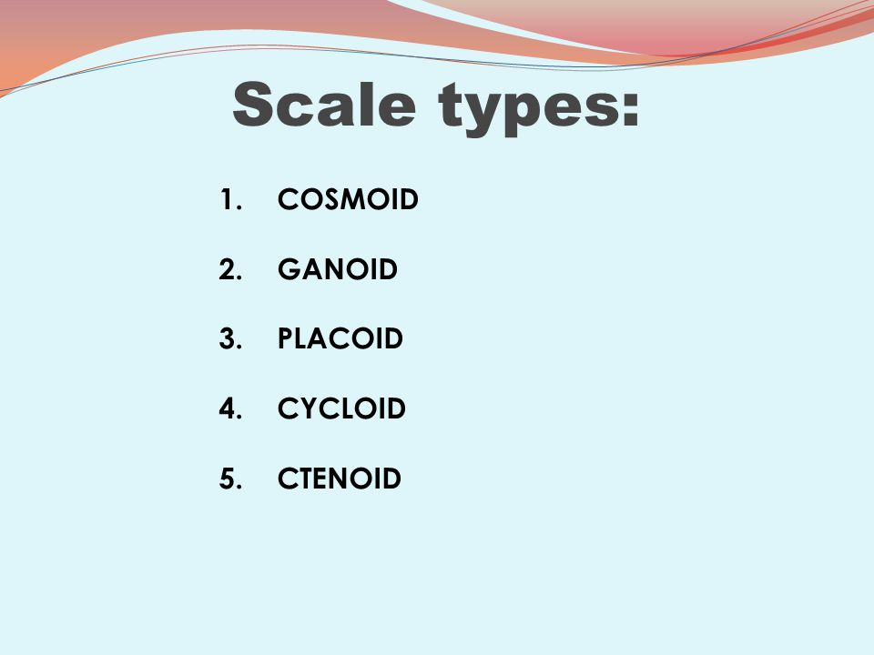 Scale types: 1. COSMOID 2. GANOID 3. PLACOID 4. CYCLOID 5. CTENOID