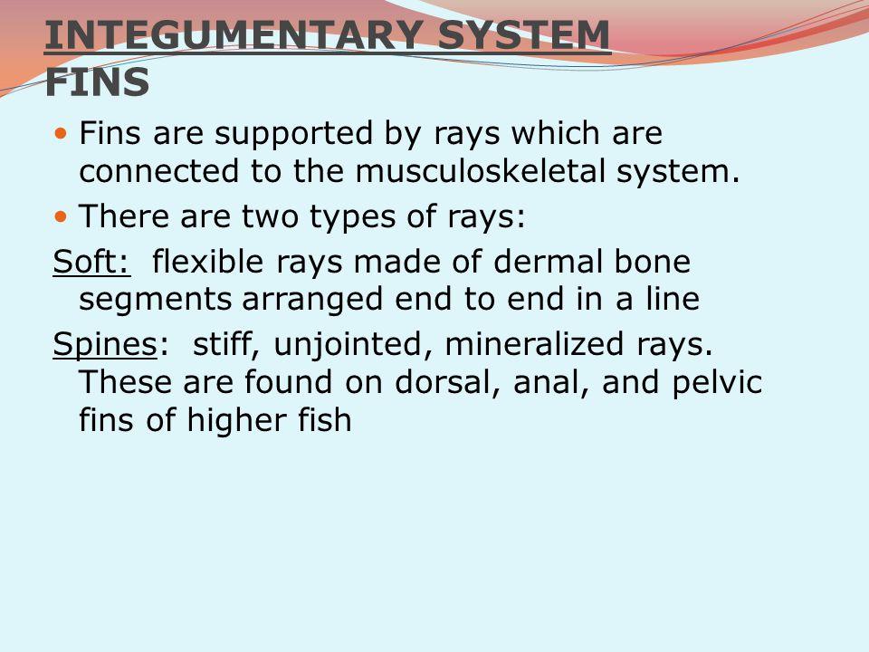 INTEGUMENTARY SYSTEM FINS