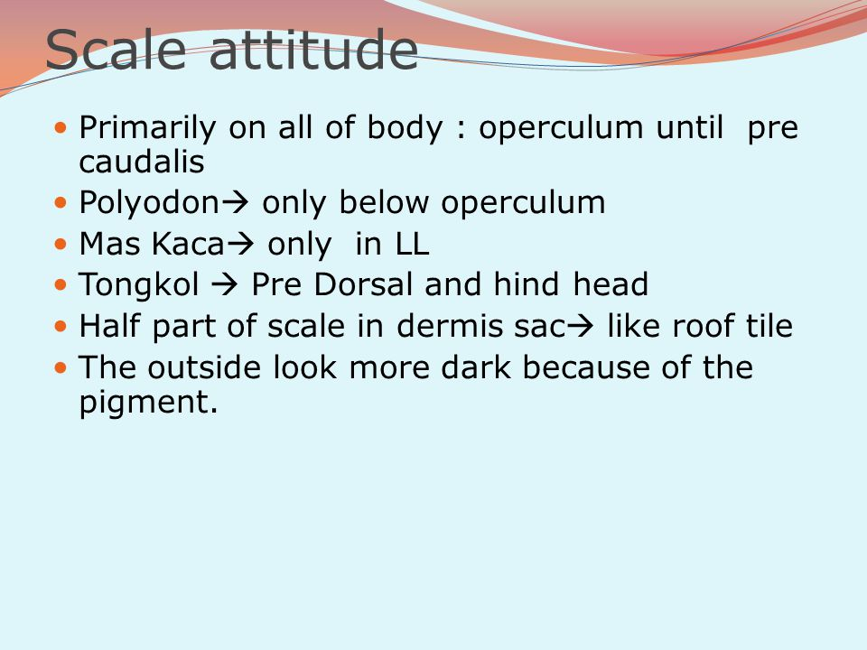 Scale attitude Primarily on all of body : operculum until pre caudalis