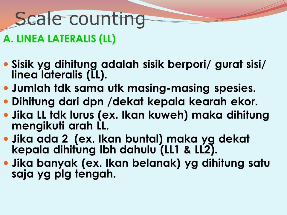 Scale counting A. LINEA LATERALIS (LL) Sisik yg dihitung adalah sisik berpori/ gurat sisi/ linea lateralis (LL).