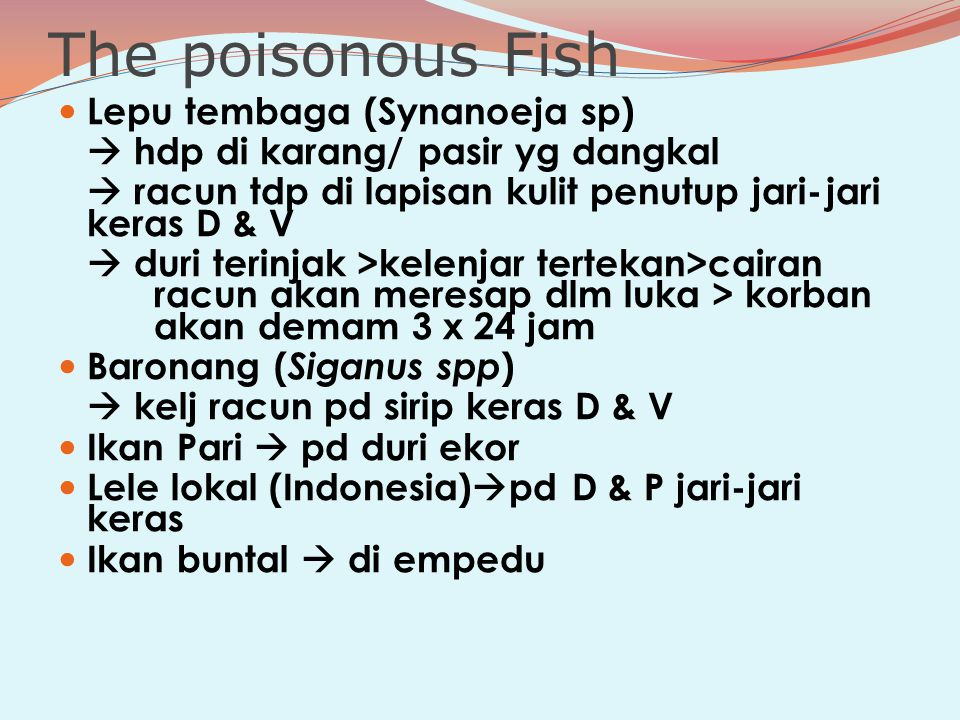 The poisonous Fish Lepu tembaga (Synanoeja sp)