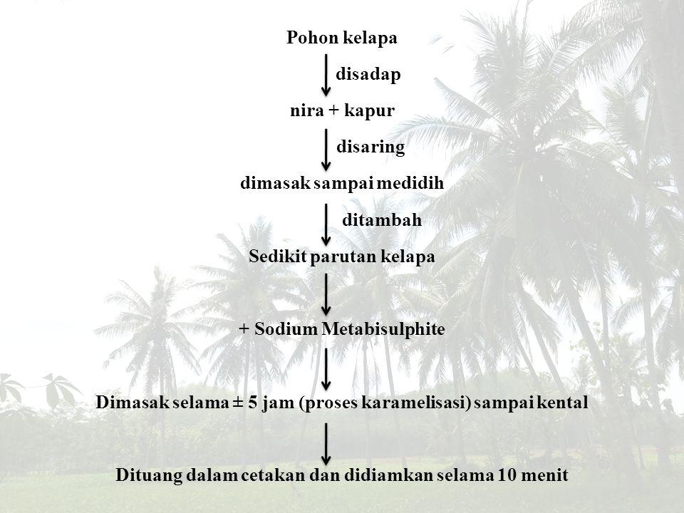 Pohon kelapa disadap nira + kapur disaring dimasak sampai medidih ditambah Sedikit parutan kelapa + Sodium Metabisulphite Dimasak selama ± 5 jam (proses karamelisasi) sampai kental Dituang dalam cetakan dan didiamkan selama 10 menit