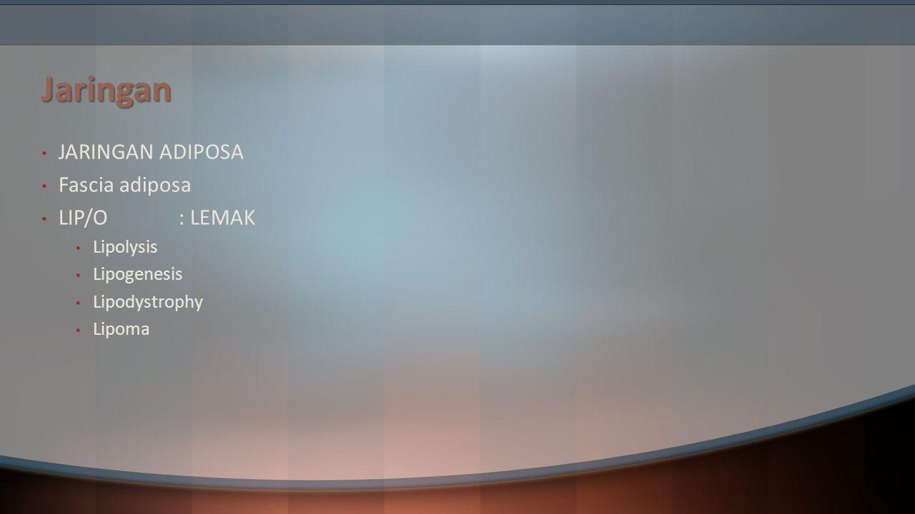 Jaringan JARINGAN ADIPOSA Fascia adiposa LIP/O : LEMAK Lipolysis