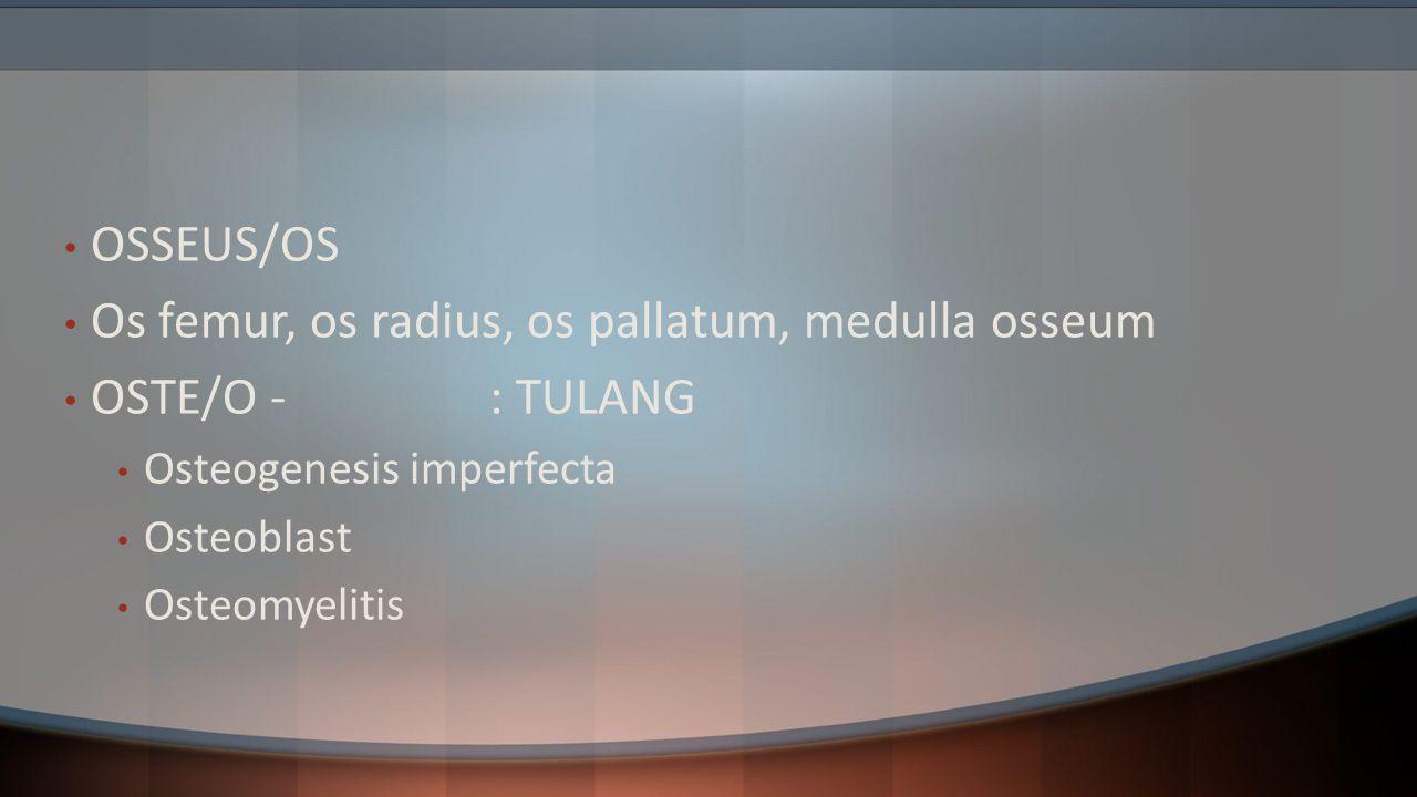 Os femur, os radius, os pallatum, medulla osseum OSTE/O - : TULANG
