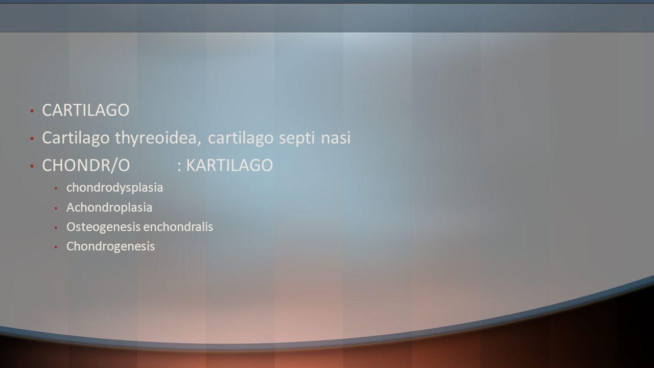 Cartilago thyreoidea, cartilago septi nasi CHONDR/O : KARTILAGO