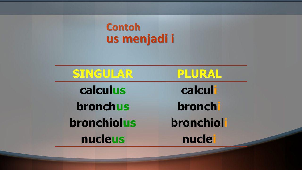 Contoh us menjadi i SINGULAR. PLURAL. calculus. bronchus. bronchiolus. nucleus. calculi. bronchi.