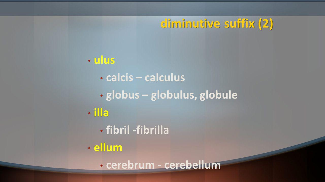 diminutive suffix (2) ulus calcis – calculus