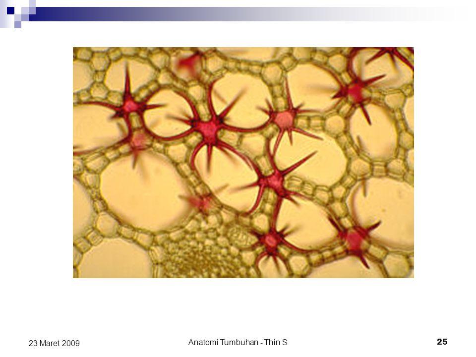 Anatomi Tumbuhan - Thin S