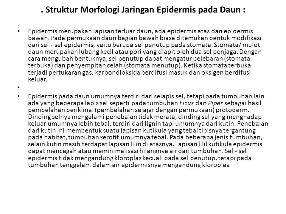 . Struktur Morfologi Jaringan Epidermis pada Daun :