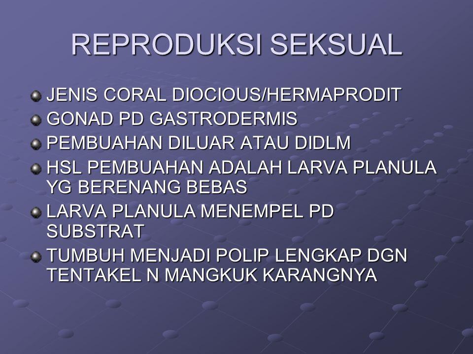 REPRODUKSI SEKSUAL JENIS CORAL DIOCIOUS/HERMAPRODIT