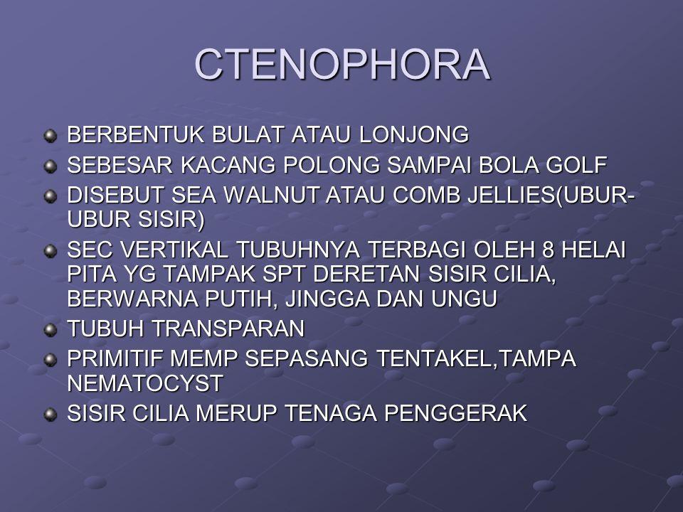 CTENOPHORA BERBENTUK BULAT ATAU LONJONG