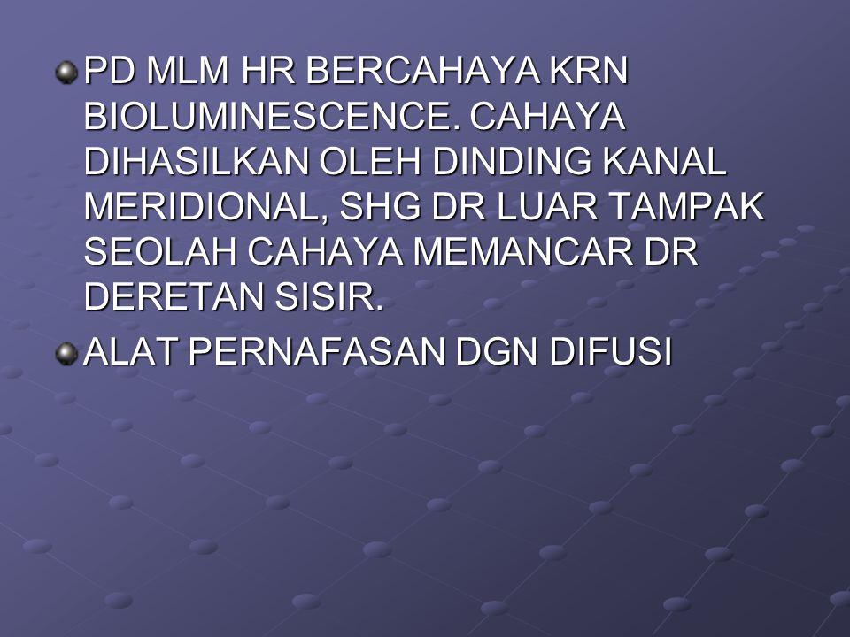 PD MLM HR BERCAHAYA KRN BIOLUMINESCENCE