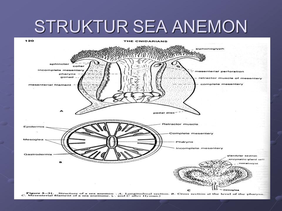 STRUKTUR SEA ANEMON