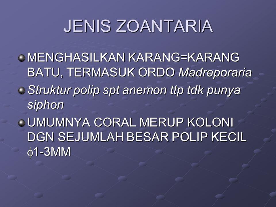 JENIS ZOANTARIA MENGHASILKAN KARANG=KARANG BATU, TERMASUK ORDO Madreporaria. Struktur polip spt anemon ttp tdk punya siphon.