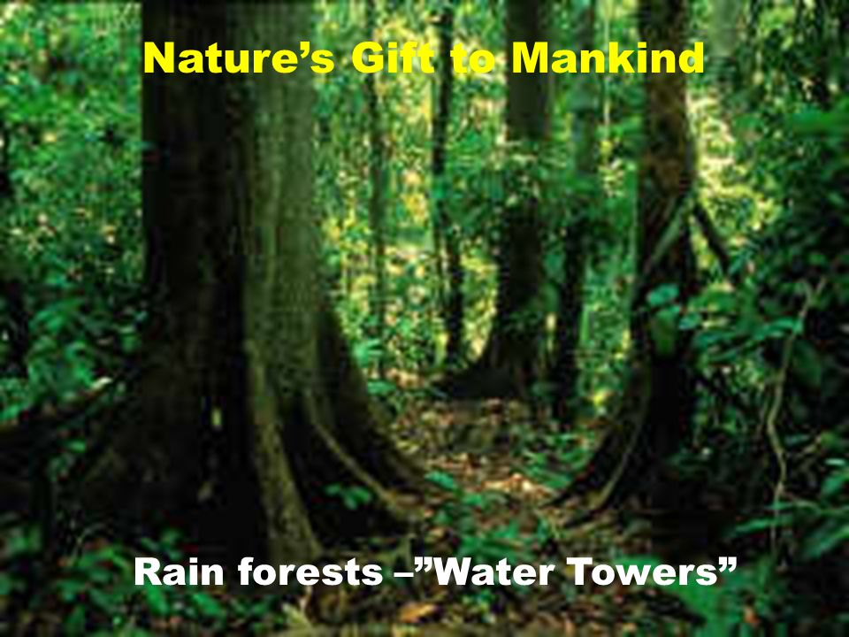 Rain forests – Water Towers