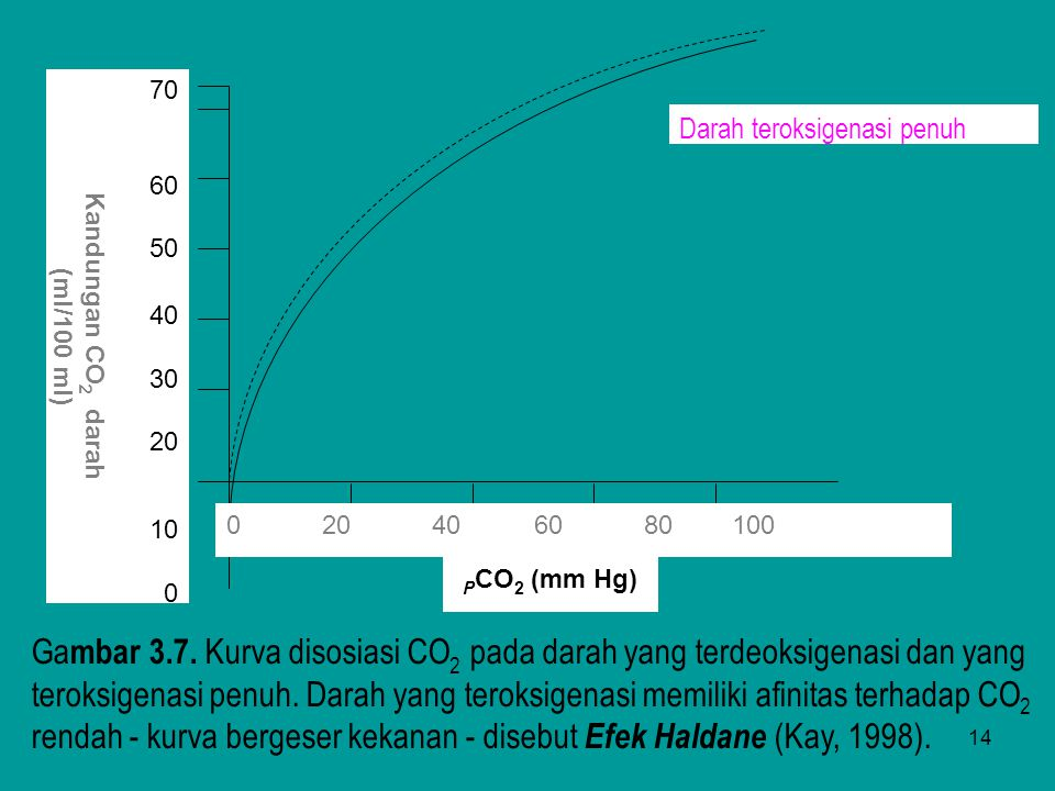70 60. 50. 40. 30. 20. 10. Kandungan CO2 darah. (ml/100 ml) 0 20 40 60 80 100.