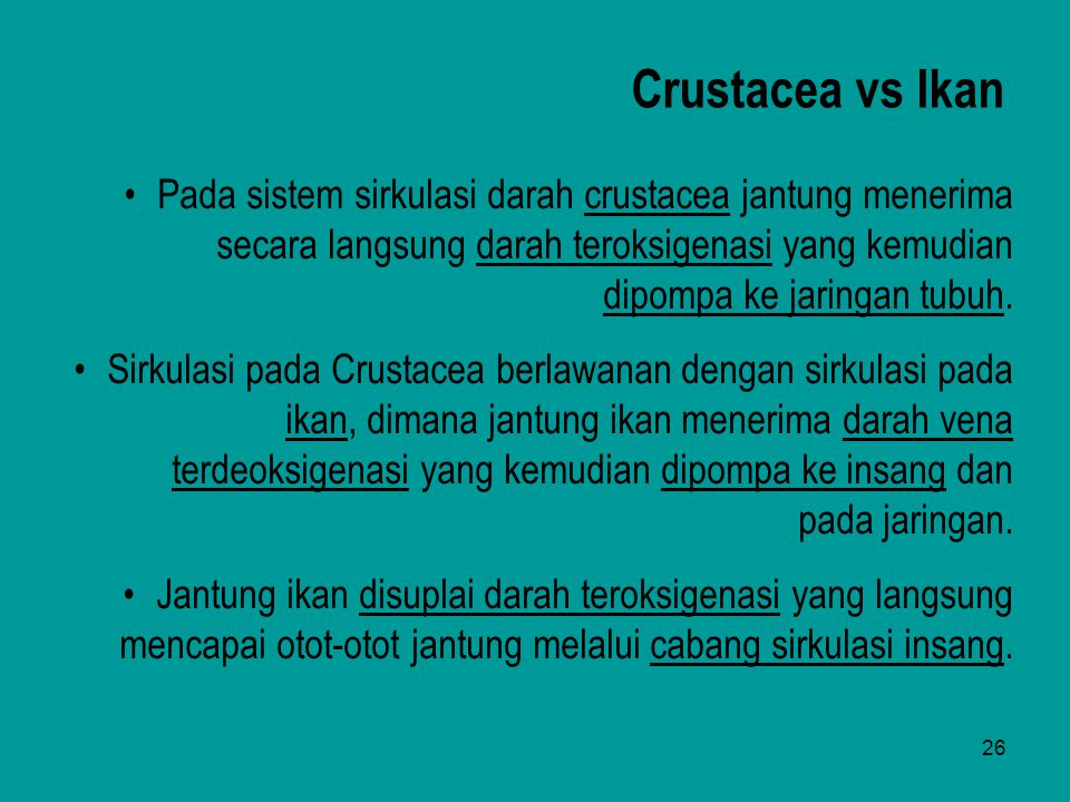 Crustacea vs Ikan Pada sistem sirkulasi darah crustacea jantung menerima secara langsung darah teroksigenasi yang kemudian dipompa ke jaringan tubuh.